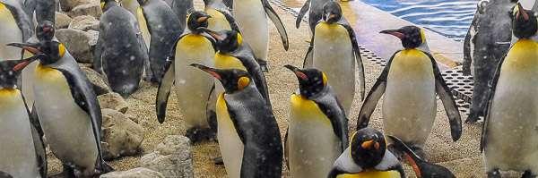 白浜の「アドベンチャーワールド」で撮ったペンギンの写真を貼っていくよ | ロプログ