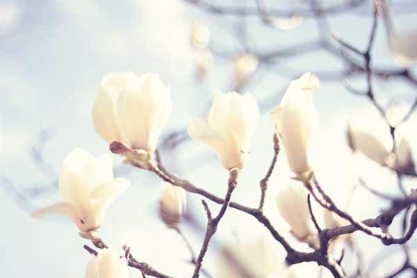 カネボウ美白化粧品の白斑事件とは?知っておくべき要注意成分 | 化粧品白書