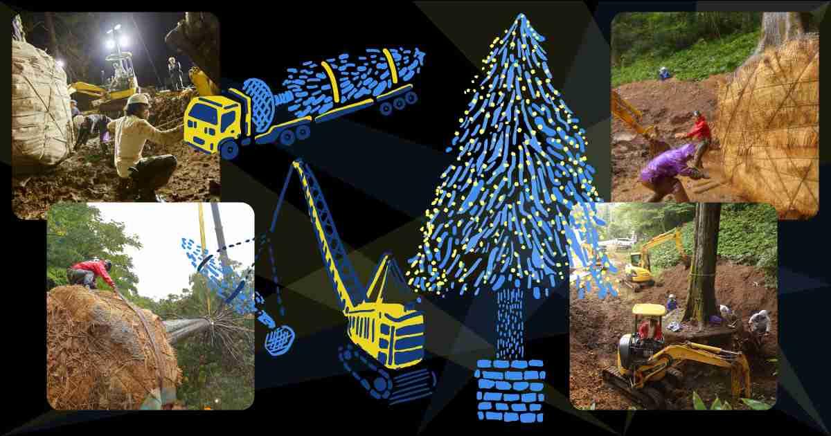 「世界一のクリスマスツリー」の植樹式。 - ほぼ日刊イトイ新聞