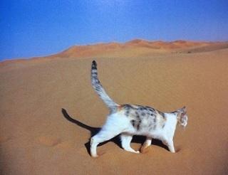 猫が「風呂のお湯」を飲むのはなぜなのか? 理由を猫好きに聞いてみた