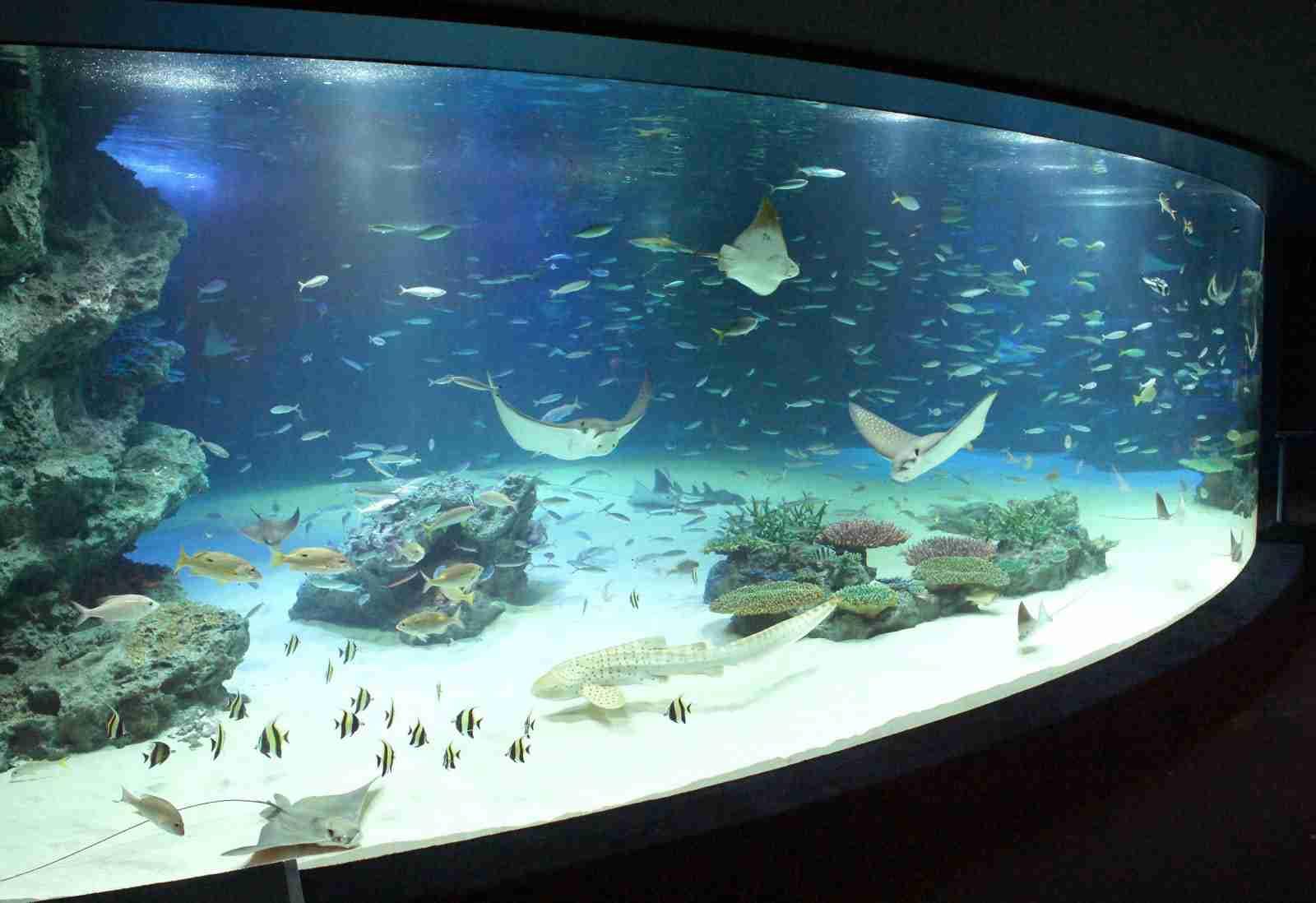 大水槽の魚1235匹死ぬ…サンシャイン水族館
