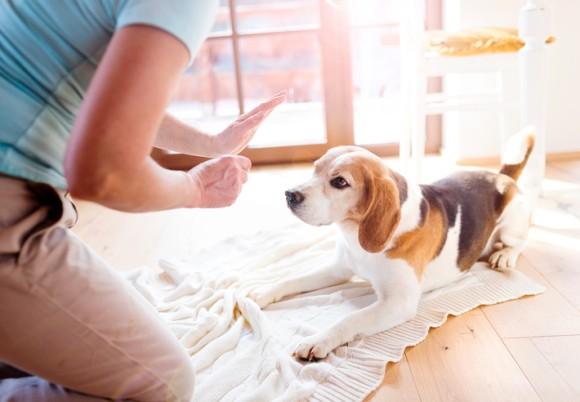 犬と猫、両方飼いたい人の為の、犬と猫を仲良くさせるための9つのコツ