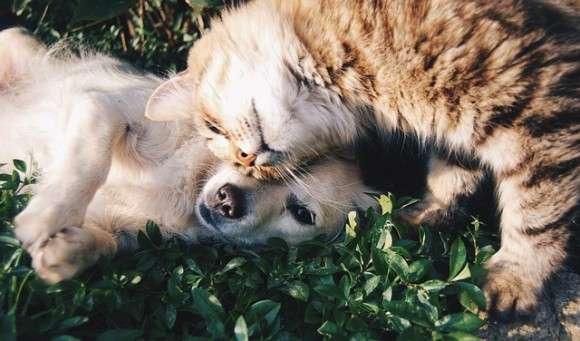 犬と猫、両方飼いたい人の為の、犬と猫を仲良くさせるための9つのコツ : カラパイア