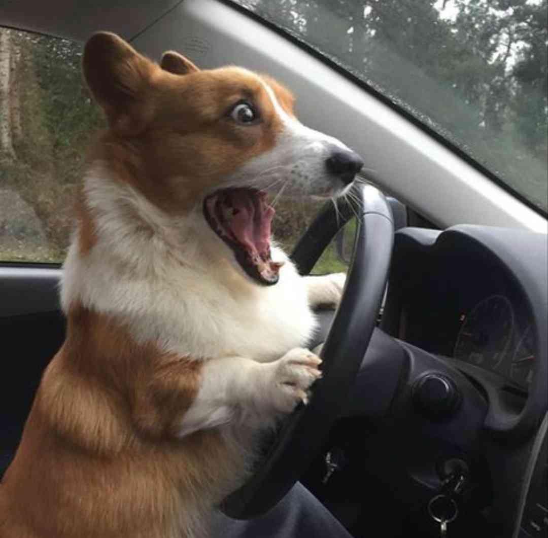 車の運転でありがちなこと