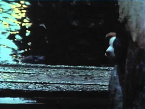 サントリートリスCM「雨と子犬」篇 60sec. 480p - YouTube