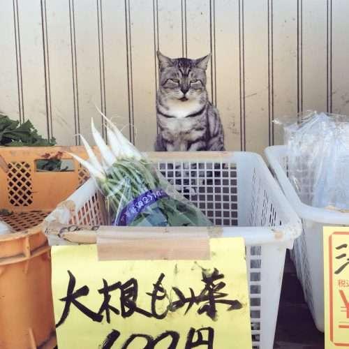 農家の無人販売が有猫販売に。猫店員さんのオススメ野菜はコチラ!