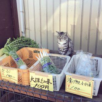農家の無人販売が有猫販売に。猫店員さんのオススメ野菜はコチラ! | おたくま経済新聞