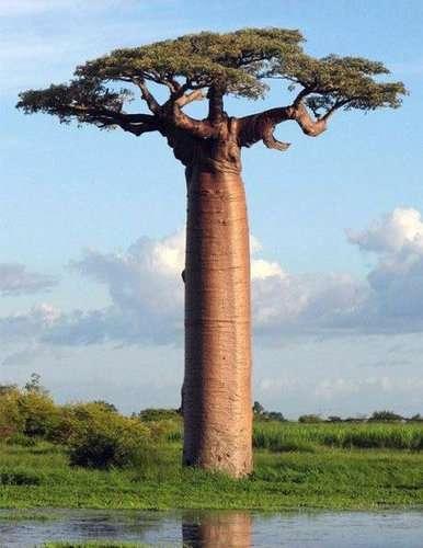 御神木の画像