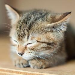 猫は好きだけど猫アレルギーの人