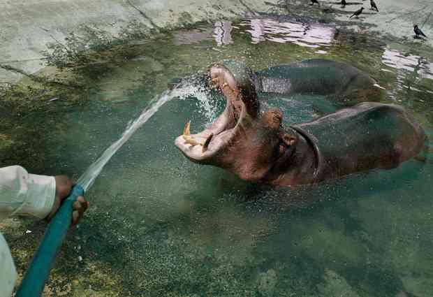 KABA.ちゃんが1日に飲む水の量に驚き…医師からは水中毒の恐れがあると指摘