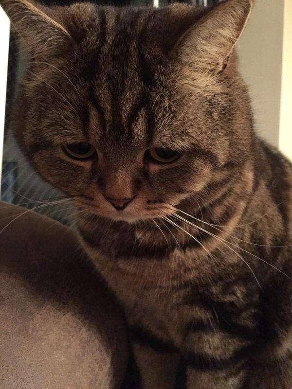 猫に「コタツを片づける」と言った結果www
