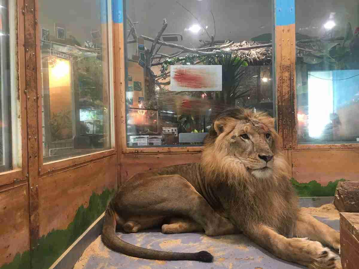 ピエリ守山「めっちゃさわれる動物園」で虐待疑惑 ライオンが流血、運営会社の飼育方法に疑問の声