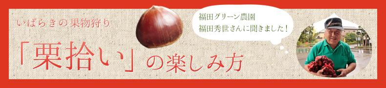 栗拾いの楽しみ方   観光いばらき(茨城県の観光情報ポータルサイト)