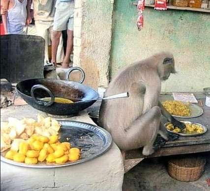 世界の屋台料理を語りたいガル民集え