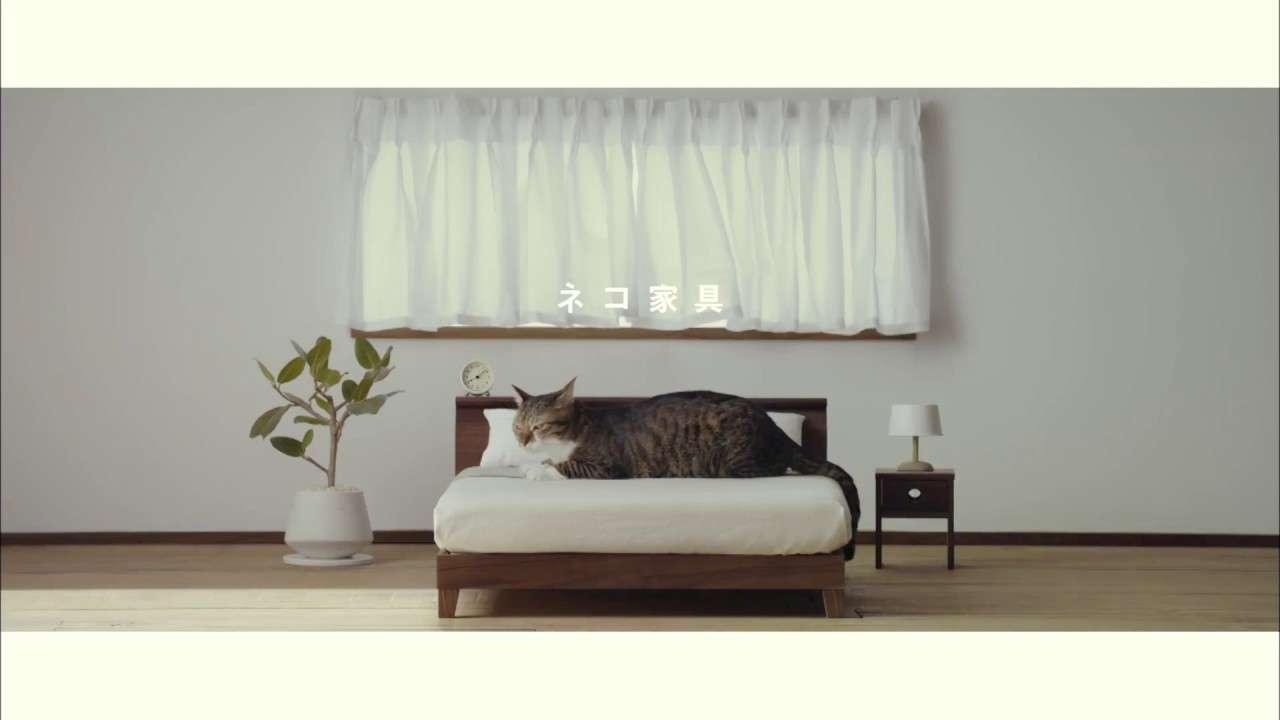 【ネコ家具できました】篇  We made cat furniture. - YouTube