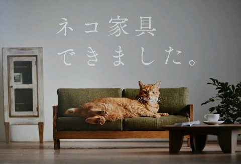 ネコ家具、世界が注目 動画、CMアクセス殺到 [福岡県] - 西日本新聞