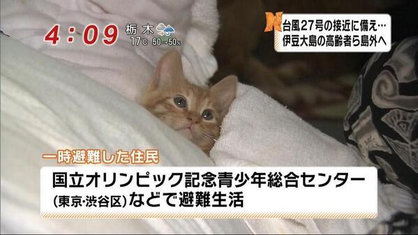 猫カフェの玄関先にネコ放置 飼い主の行動を「異常な人間性」と非難