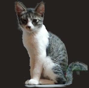 命日: DR.Kの殺戮記録-私の猫(こども)たちはこうして殺された
