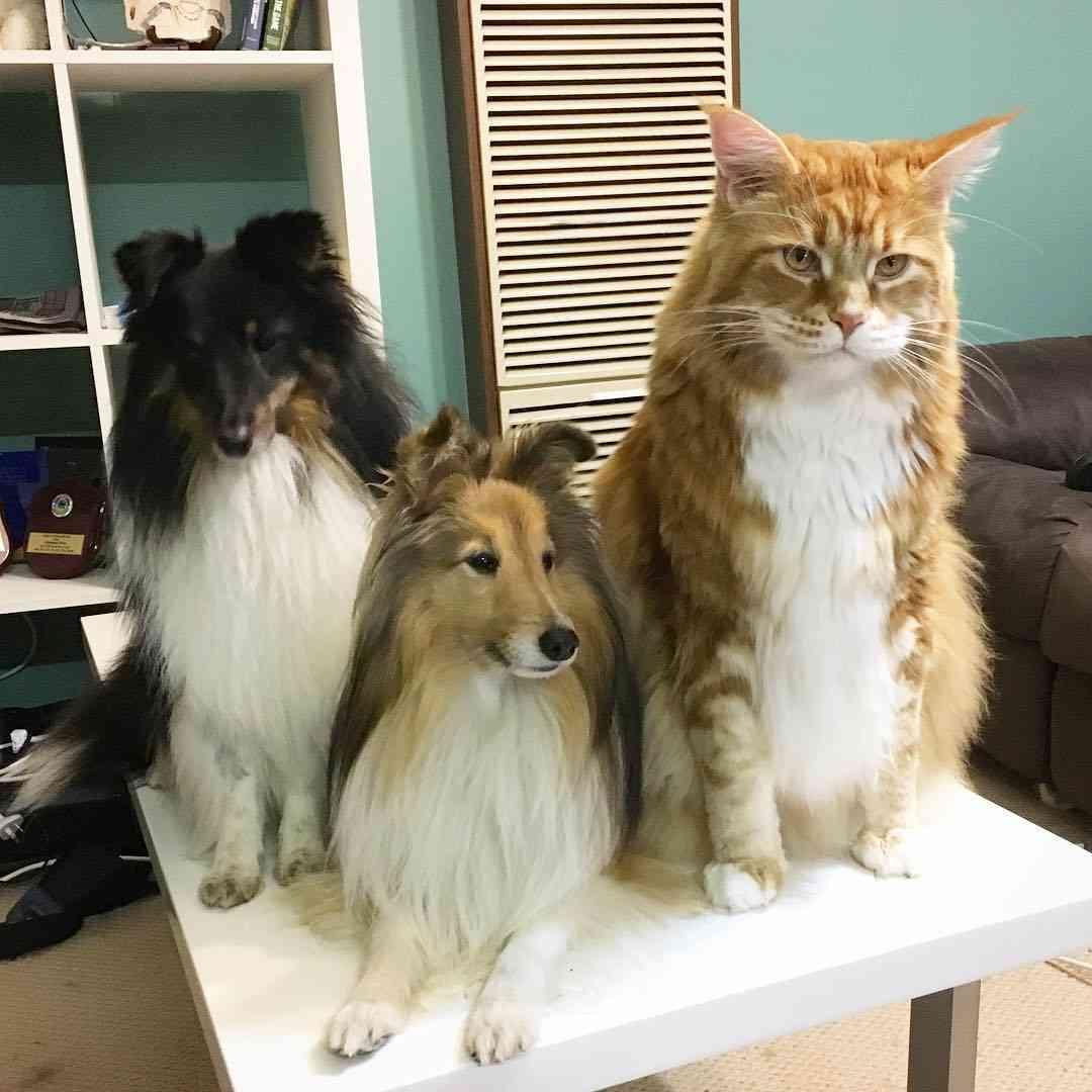 """「家具とマッチしないから」 動物慈善団体が明かした""""飼い主が犬を手放す理由""""に愕然(英)"""