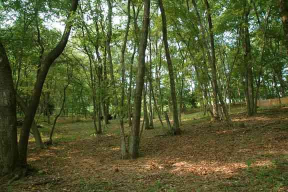 小学生らが雑木林で男性遺体を発見、死後数カ月以上…群馬・高崎