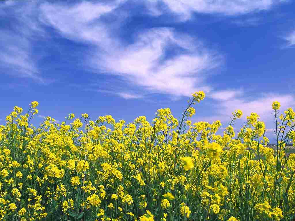 春の画像で未来に希望を持ちたい