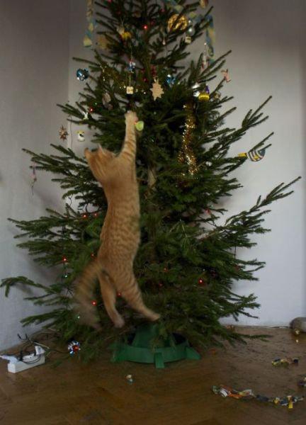 猫と幼い子供がいる家庭でもクリスマスツリーを飾りたい!→検索したらみんながえらく苦労している様子が見て取れた