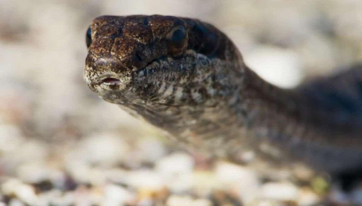 イグアナが迫り来るヘビの大群から間一髪で逃れていく映画さながらのド迫力ムービーが公開中 - GIGAZINE
