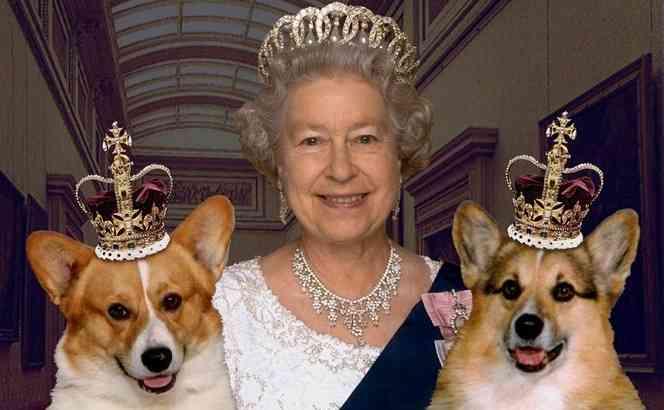 英国には連れていけない!ハリー王子と婚約したメーガンさんが愛犬との別れを決意