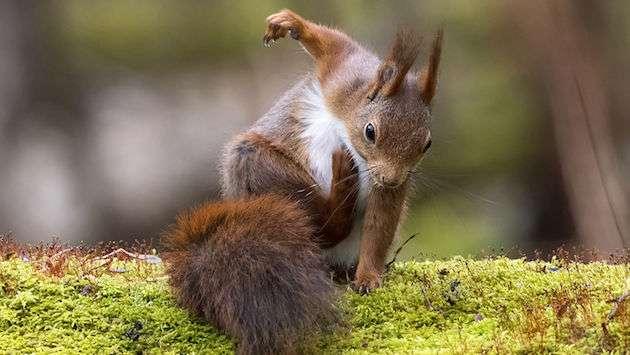 今年最も面白い野生動物の写真を決める大会「コメディ・ワイルドライフ・フォトグラフィー・アワード 2017」が開催!! : ユルクヤル、外国人から見た世界