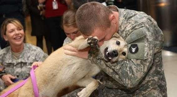 うれしいよお、うれしいよお。帰還した兵士と犬の感動の再会 : カラパイア