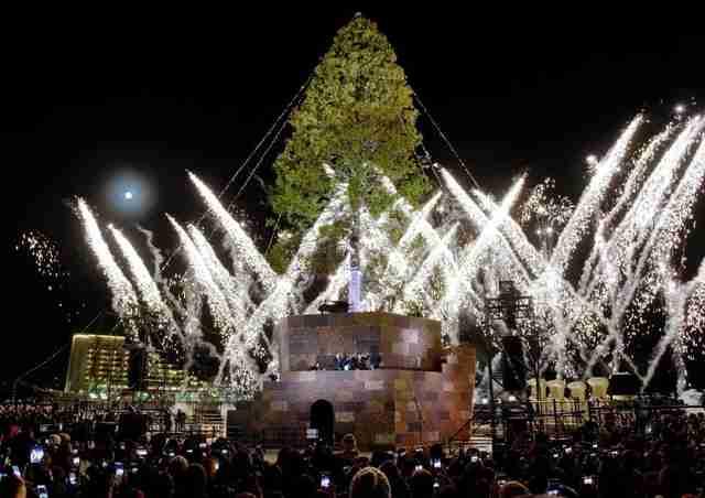 【世界一のクリスマスツリー】記念品企画を白紙にし、一部を「鳥居」にすることが決定 プラントハンター西畠氏が声明発表