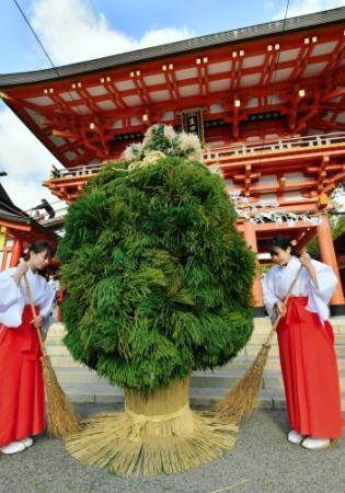 松は不吉!? だから、杉で… 神戸・生田神社の迎春飾り、名物「杉盛り」登場 (神戸新聞NEXT) - Yahoo!ニュース