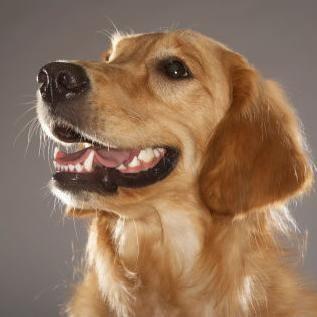 10ヶ月の女児が犬に噛まれ死亡…改めて問われる「飼い犬」の危険 - NAVER まとめ