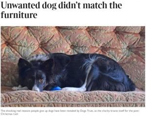 英で飼い主たちの犬を捨てた理由に愕然「家具とマッチしないから」 - ライブドアニュース