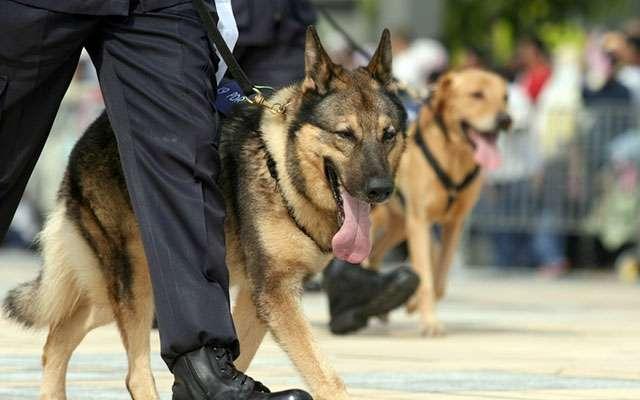 「恩を仇で返すの?」何千人もの命を救ってきた軍用犬の殺処分に反対の声  –  grape [グレイプ]