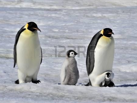 """イモトアヤコ「イッテQ登山部」でついに南極大陸へ!""""究極の地""""で年越し"""