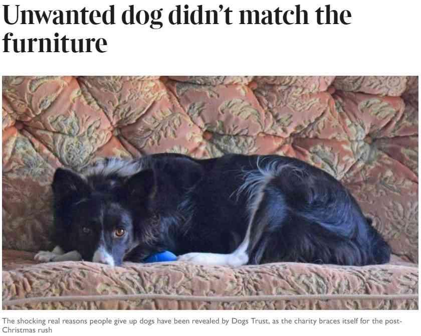 """【海外発!Breaking News】「家具とマッチしないから」 動物慈善団体が明かした""""飼い主が犬を手放す理由""""に愕然(英)   Techinsight(テックインサイト) 海外セレブ、国内エンタメのオンリーワンをお届けするニュースサイト"""