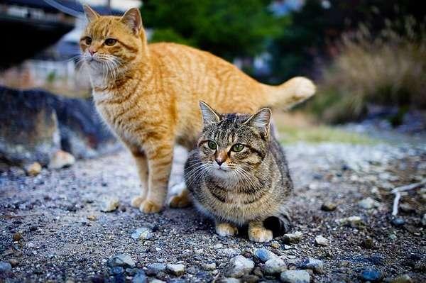 ネコは自ら人間と暮らし始めた? DNA分析で判明 | ナショジオ|NIKKEI STYLE