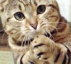 ダンボール単位でちゅーる買ってあげたくなる猫のおねだりポーズwwwwwwwww:ハムスター速報