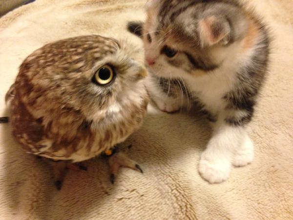 ふくろうカフェに新入り猫がやってきた。仲良くなれるかドキドキしながら見守っていた結果…
