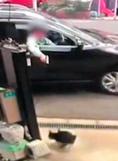 他人の飼い猫招き寄せエアガンで 虐待容疑で書類送検:朝日新聞デジタル