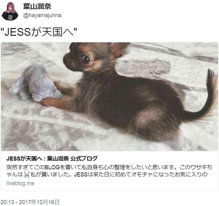 全文表示 | モデル・葉山潤奈「私は犬殺しではありません」 ネット中傷に反論「あれは不慮の事故」 : J-CASTニュース