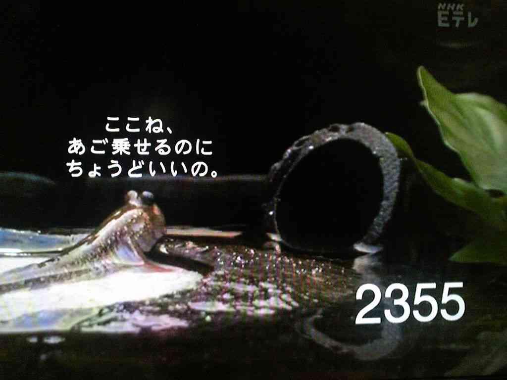 0655/2355が好きなひと!