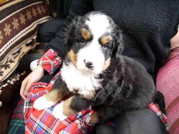 犬の繁殖のルールや注意点について