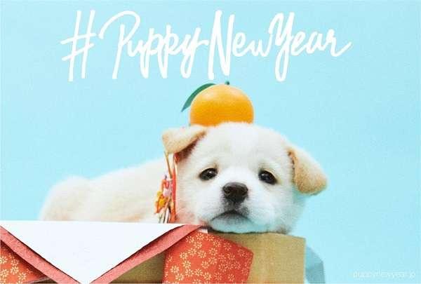 殺処分されるはずだった「保護犬」がモデルの年賀状フリー素材サイトが開設