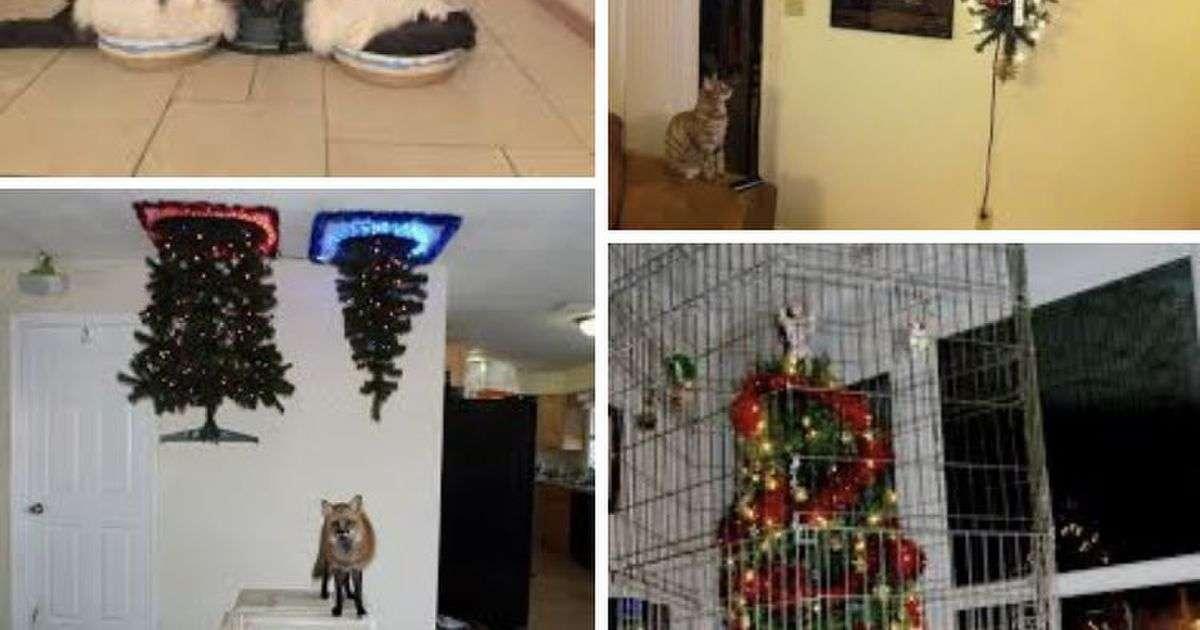 猫と幼い子供がいる家庭でもクリスマスツリーを飾りたい!→何とかして飾ろうと検索したらみんながえらく苦労している様子が見て取れた - Togetter