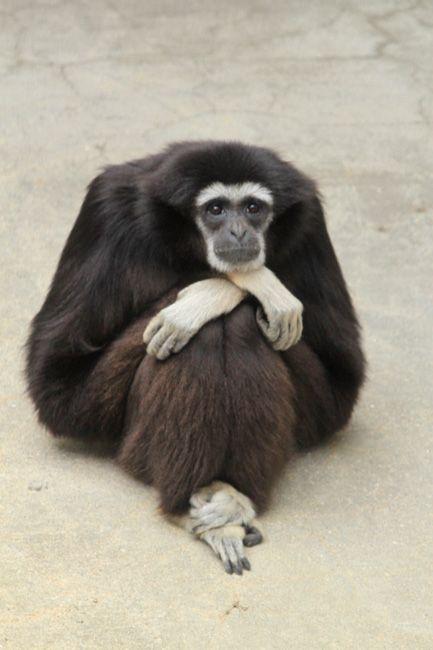 今年最も面白い野生動物の写真を決める大会「コメディ・ワイルドライフ・フォトグラフィー・アワード 2017」が開催!!