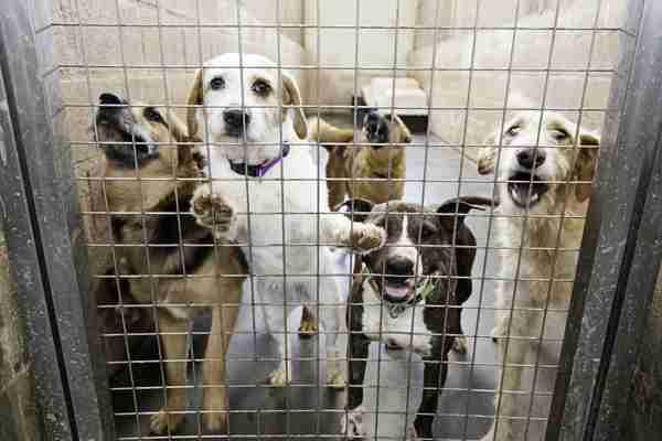 米カリフォルニア州で法案が成立 商用に大量生産したペット販売を禁止へ - ライブドアニュース
