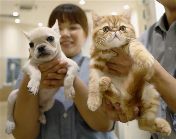 """猫の数が犬を上回る 飼育実態調査で初めて 最近の""""猫ブーム""""もプラス - 産経ニュース"""