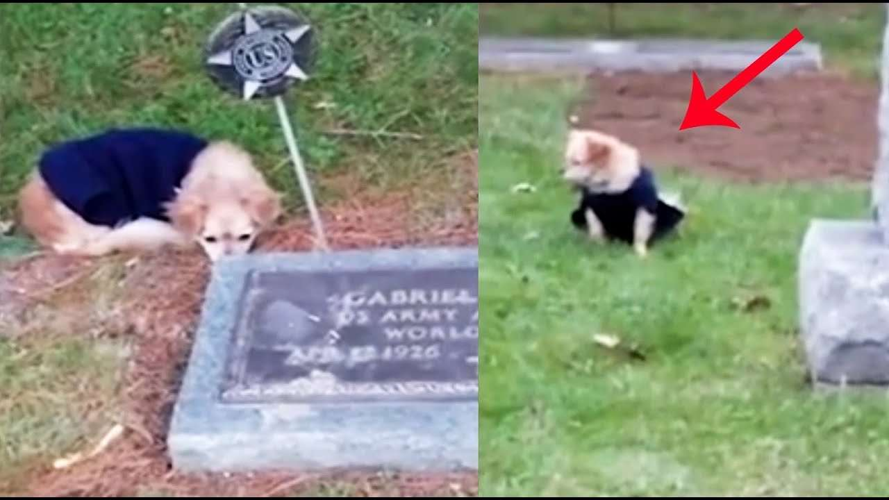 Dog refuses to leave late owner's grave - YouTube